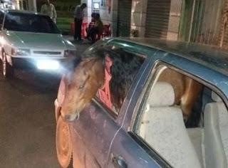 Homem é preso por embriaguez depois de levar pônei pra passear de carro
