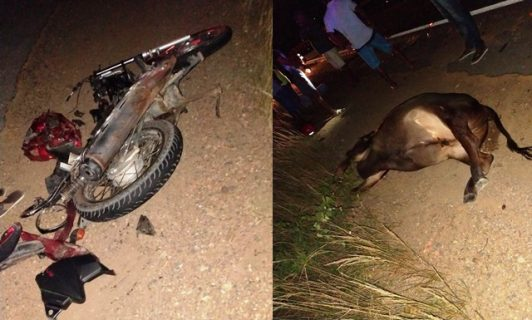 Homem morre e outro fica ferido após moto colidir com vaca na BR-116