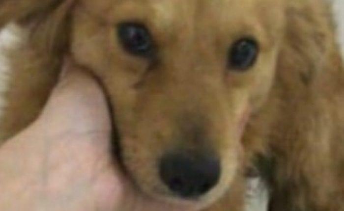 CRUELDADE SEM LIMITES! Cachorro é amarrado em carro e arrastado por 1 Km