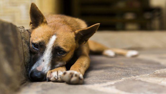 AGORA É LEI! Prefeitura de Conceição do Jacuípe institui campanha anual de prevenção aos maus tratos animais
