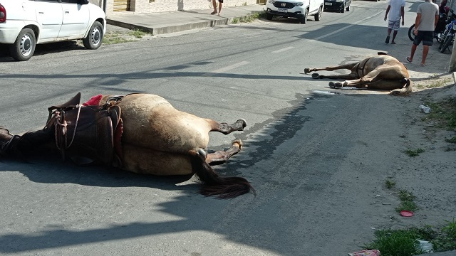 Um cavalo e duas éguas são mortos a tiros no Conjunto Feira X em Feira de Santana