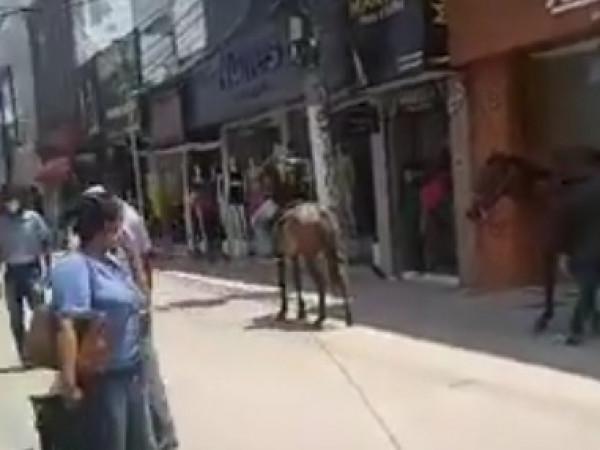 Homens são flagrados cavalgando pelo calçadão da Sales Barbosa;um dos animais fica assustado e invade loja